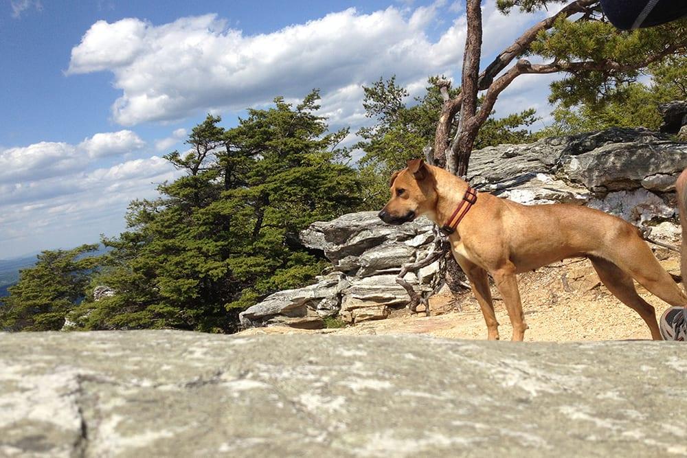 embark dog hiking