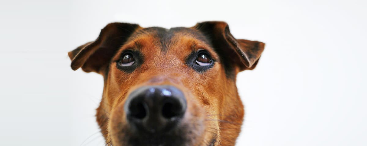 embark dog looking up