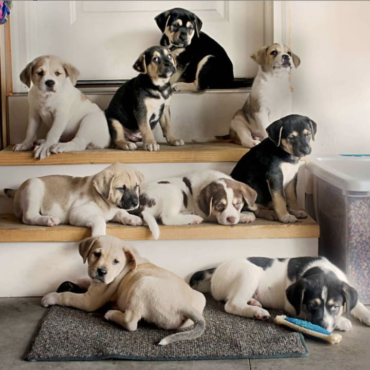 puppy litter with different colors
