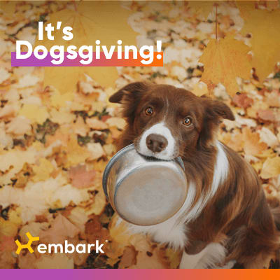 Embark Dogsgiving dog with dinner bowl in its mouth, autumn leaves in the background.