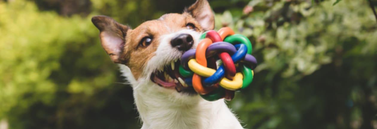 embark dog toy