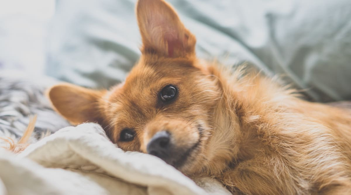 create a safe environment for your dog by puppy-proofing your home