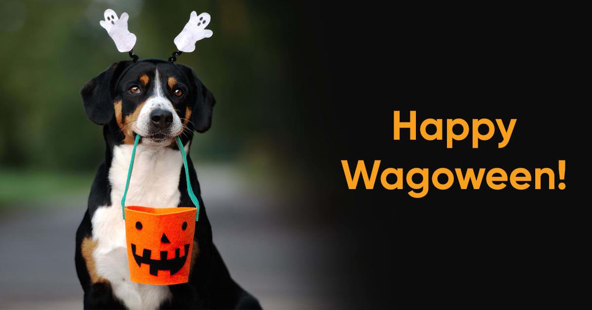 dog holding halloween bucket