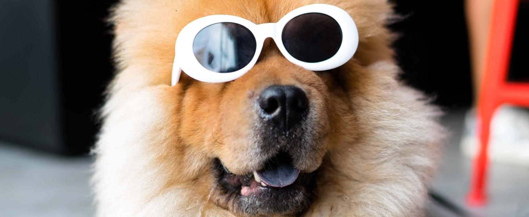 embark dog sunglasses