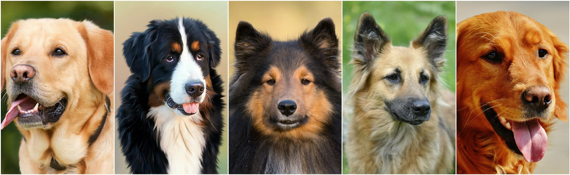 related dogs