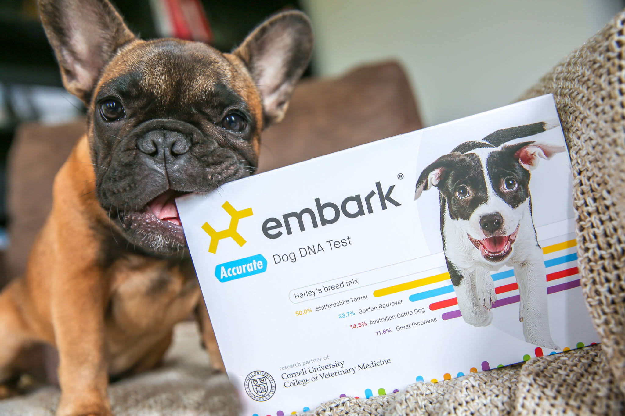 embark dog with DNA test
