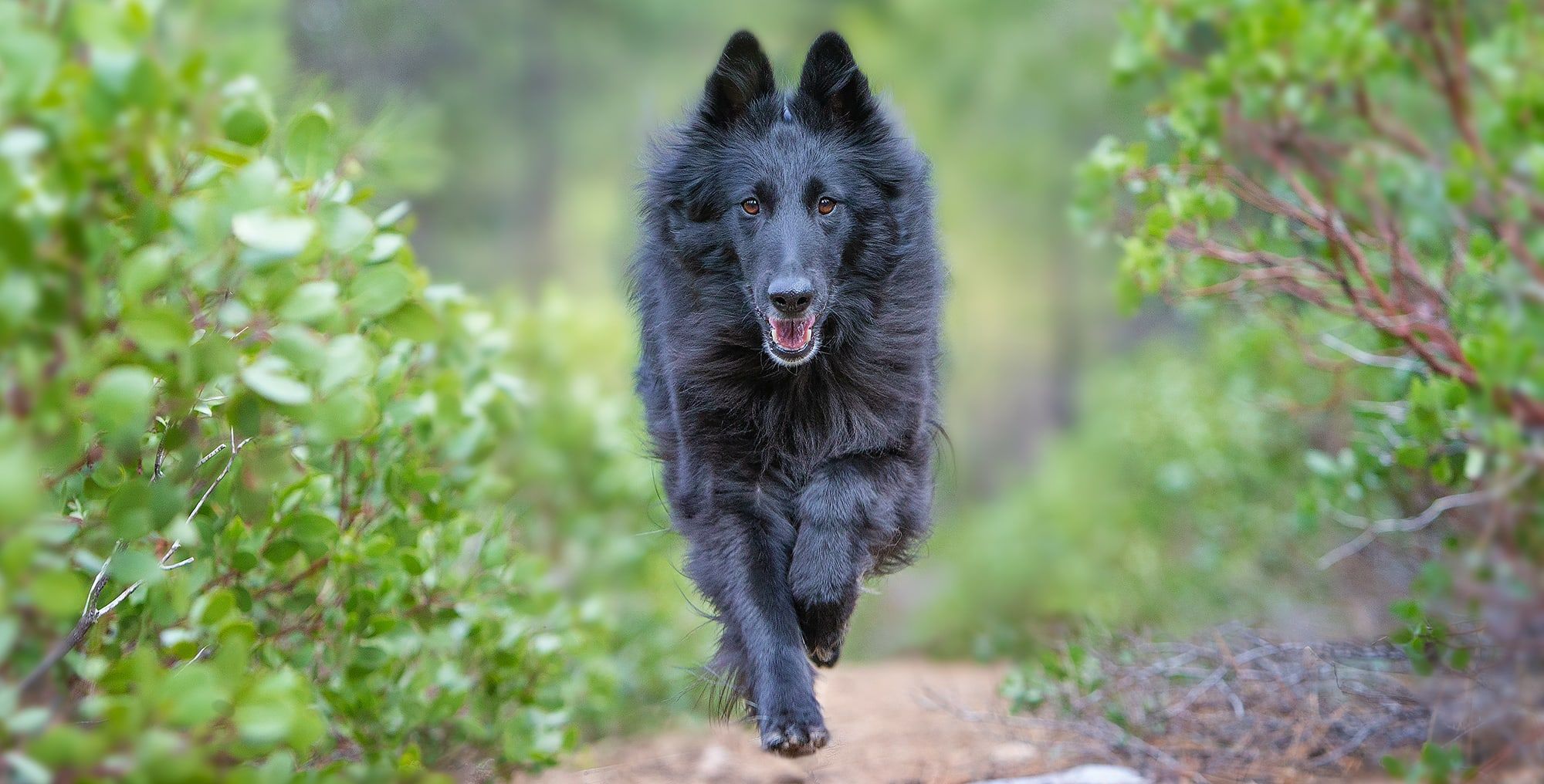 Dog DNA tests: Top 6 things breeders need to know