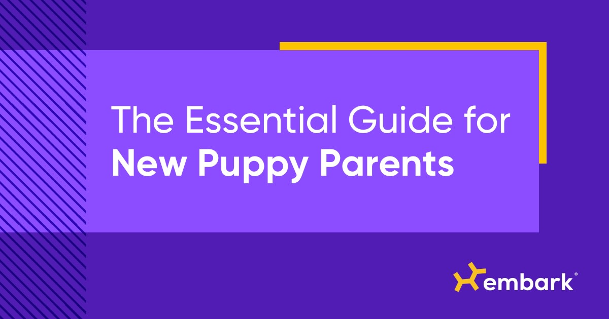 The Essential Guide for New Puppy Parents