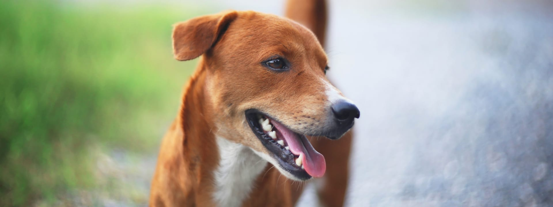 Dog Smile picture