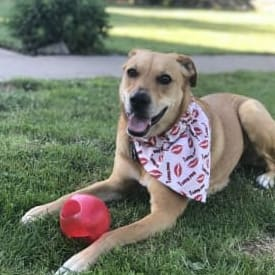 Amy S's dog Lakota