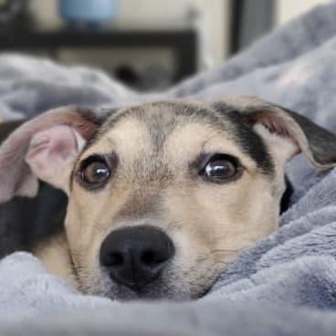 Steve S's dog Millie