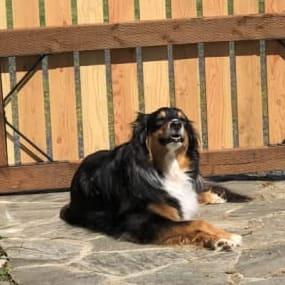 Vicky Y's dog Allie