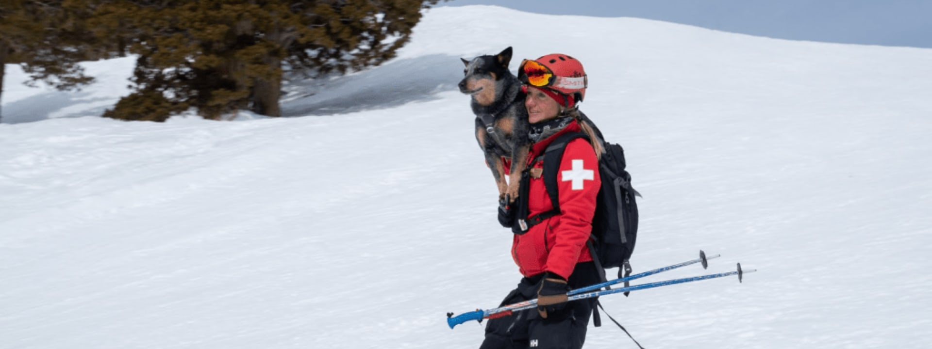 Avalanche Rescue dog with handler skiing downhill