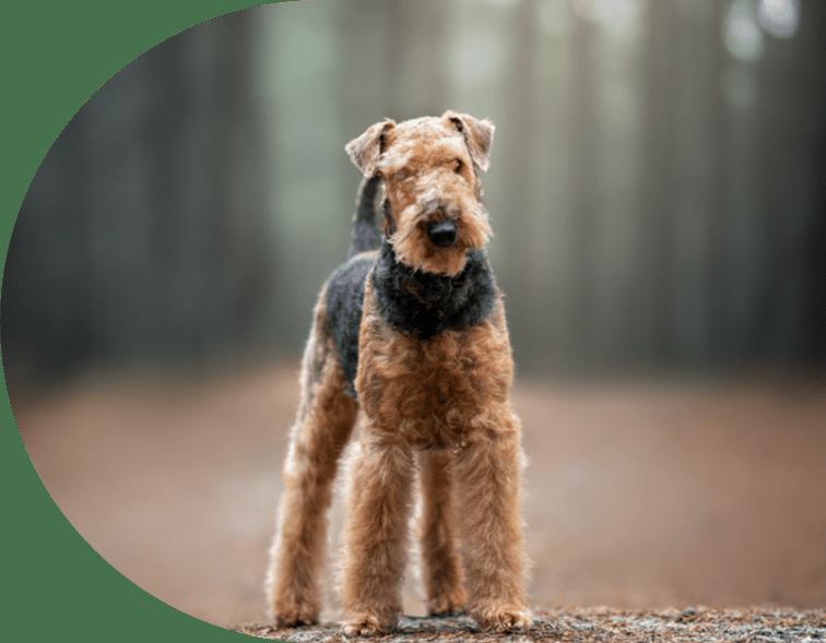 dog facing camera in woodlands