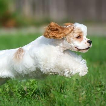 Nancy F.'s dog