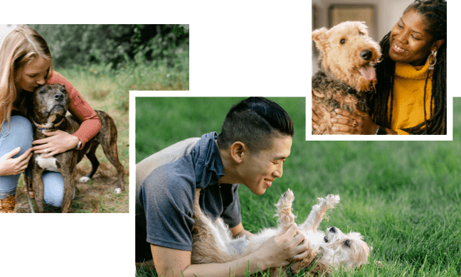 a collage of many Embark employees with their dogs