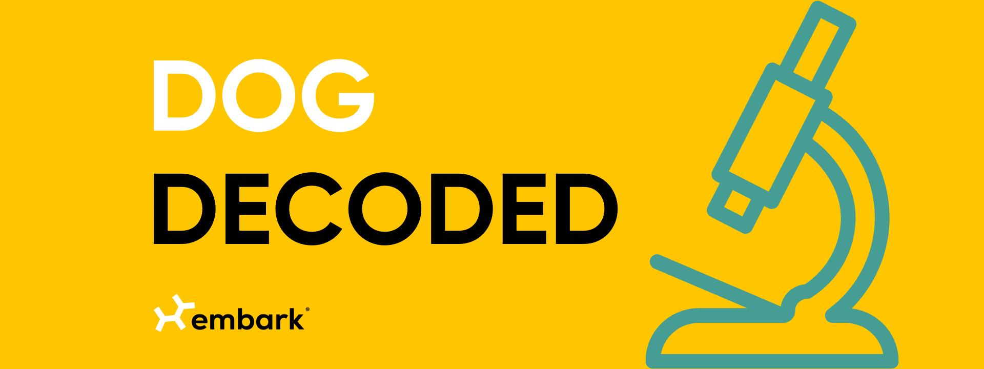 Dog Decoded Blog Header