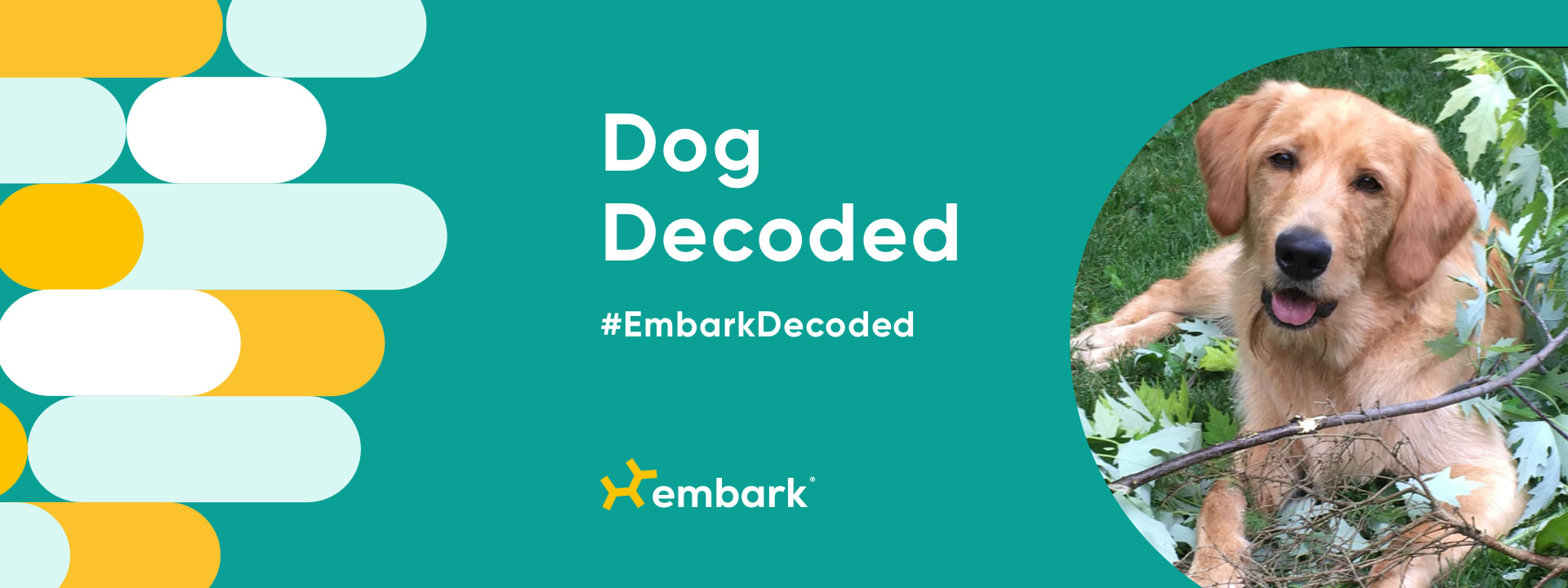 """Dog on green background next to the words """"Dog Decoded"""""""