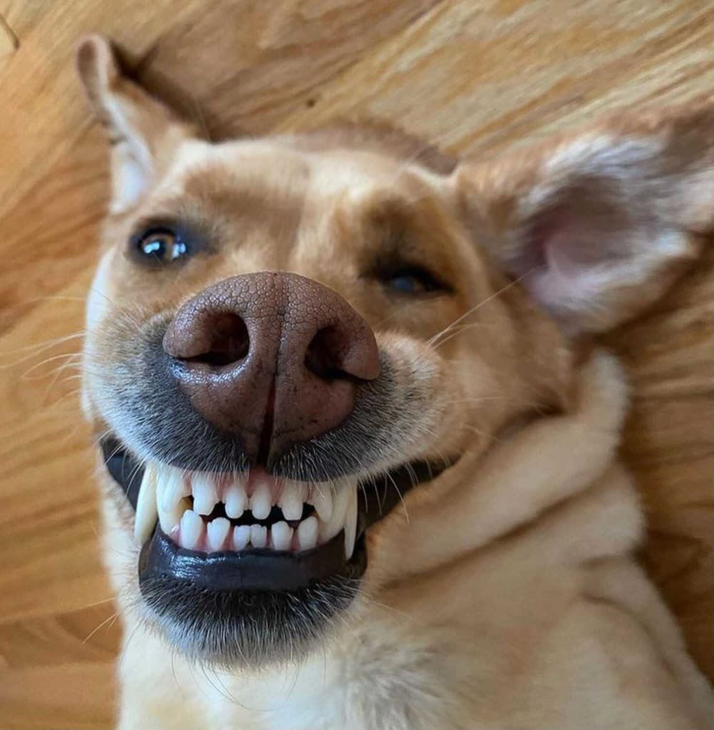 Dog Teeth Picture