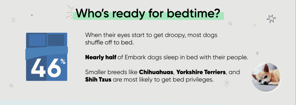 dog sleeping habits infographic sleep in bed