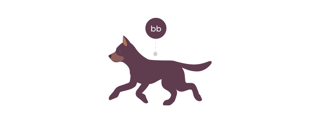Puppy with brown coat and lowercase b lowercase b genotype