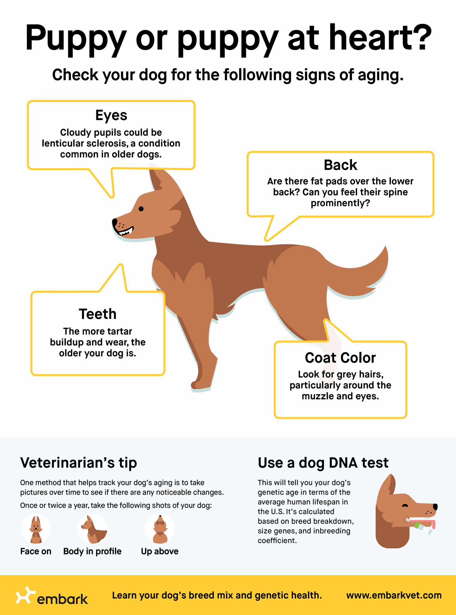 Tips for guessing your dog's age