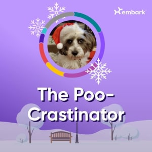 #AllGoodDogs Contest Winner The Poo-crastinator