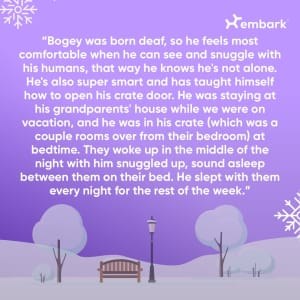 #AllGoodDog contest winner The Super Snuggler Story
