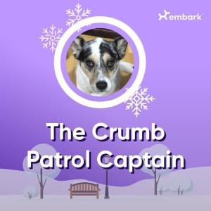 #AllGoodDogs Contest Winner The Crumb Patrol Captain