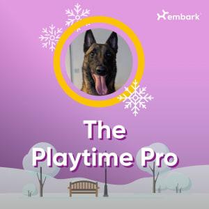 #AllGoodDogs Contest Winner Playtime Pro