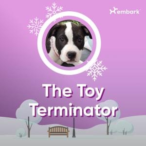 #AllGoodDogs Contest Winner Toy Terminator