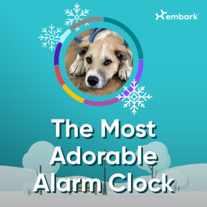 #AllGoodDogs The Most Adorable Alarm Clock Winner