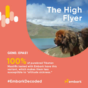 Embark Cool Canine Traits - High flyer