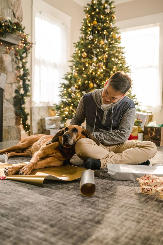 dog leaning on person in front of christmas tree