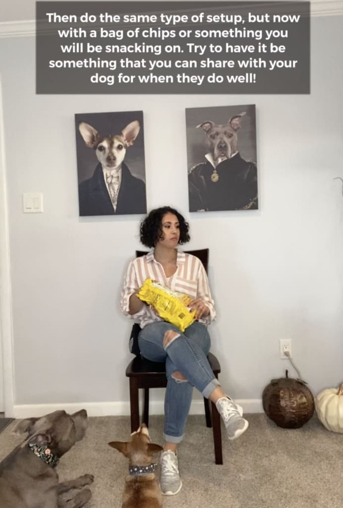 erika dog trainer sitting in front of dogs with food