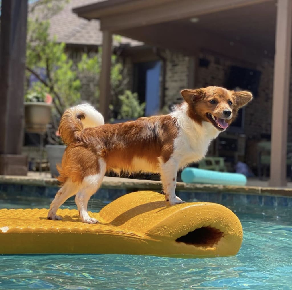 Taco_adult_in_the_pool