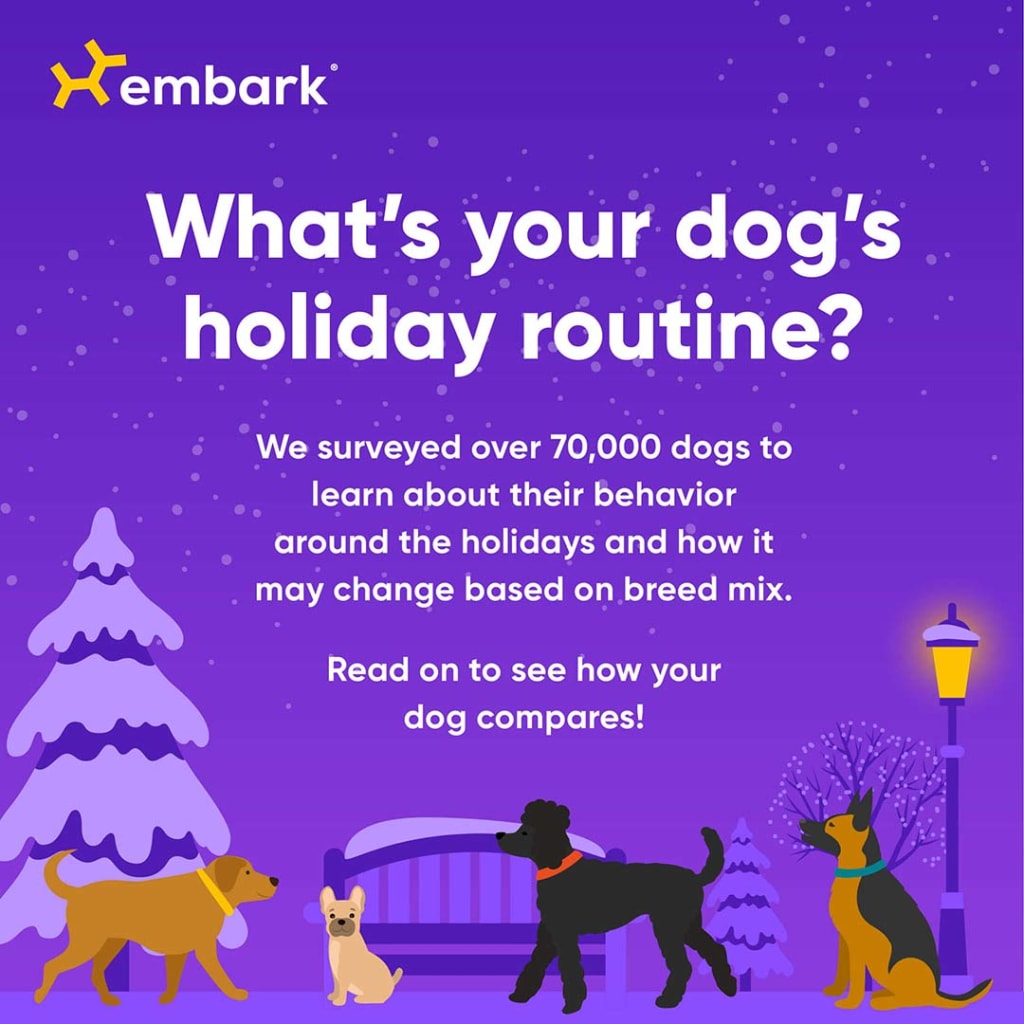 Embark's holiday gifting survey with cartoon dogs and snow imagary on a purple background