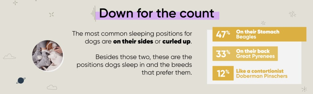 dog sleeping habits infographic positions