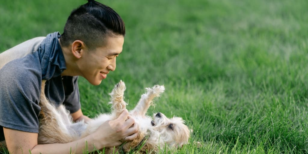 An employee playing with a dog on the grass