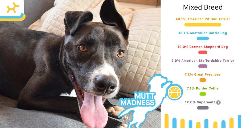 jason breed results mutt madness