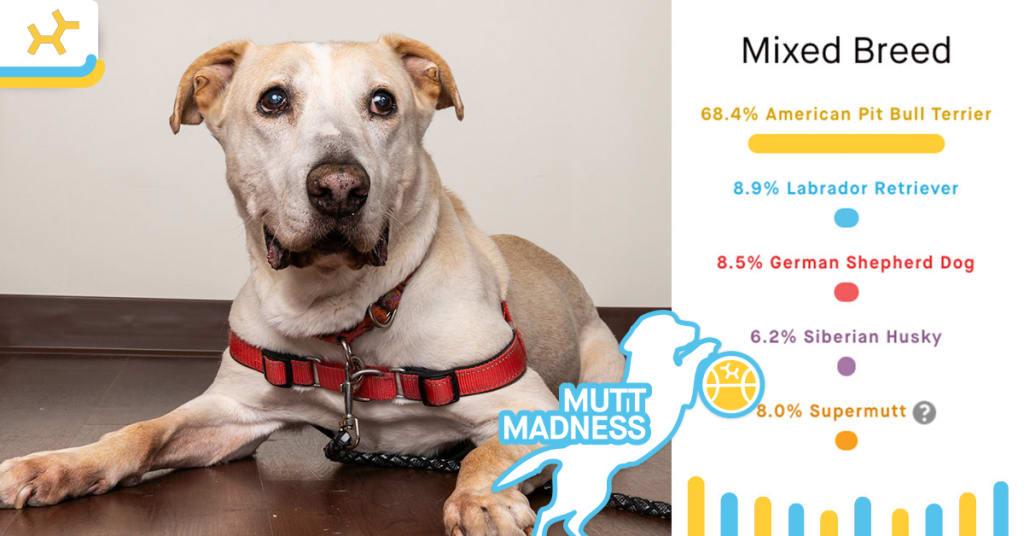 max breed results mutt madness