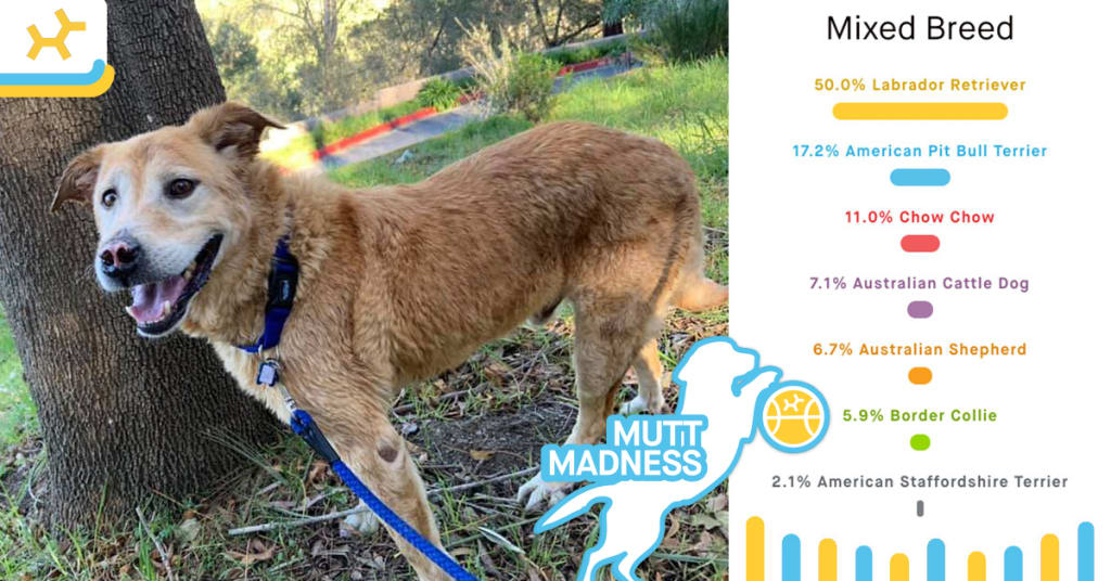 cola breed results mutt madness