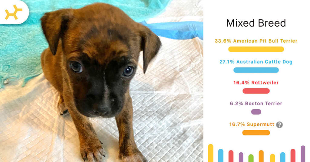 pappy breed results puppy