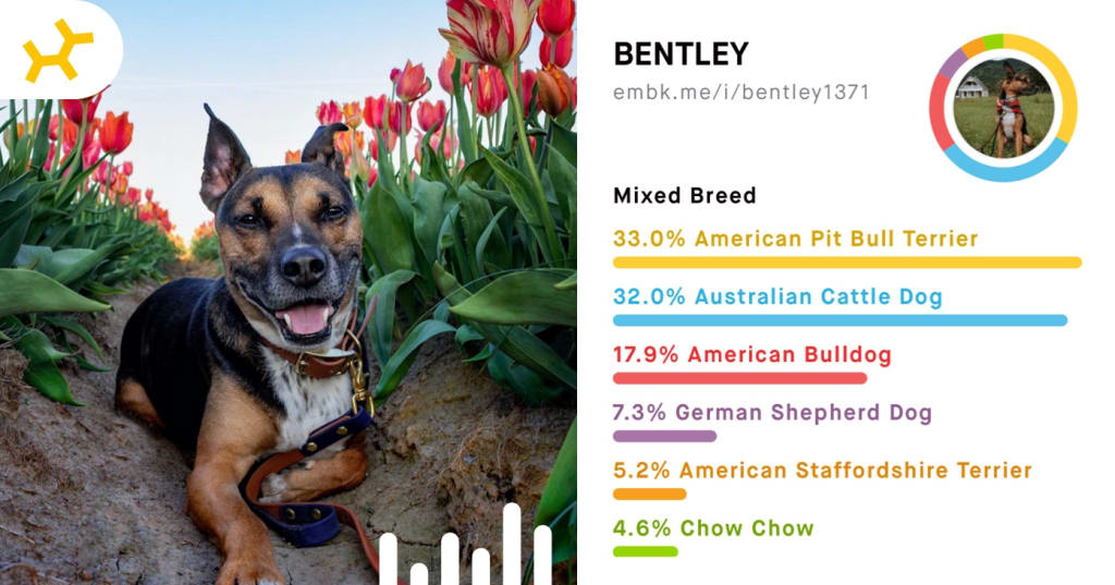 Bentley Breed Reveal