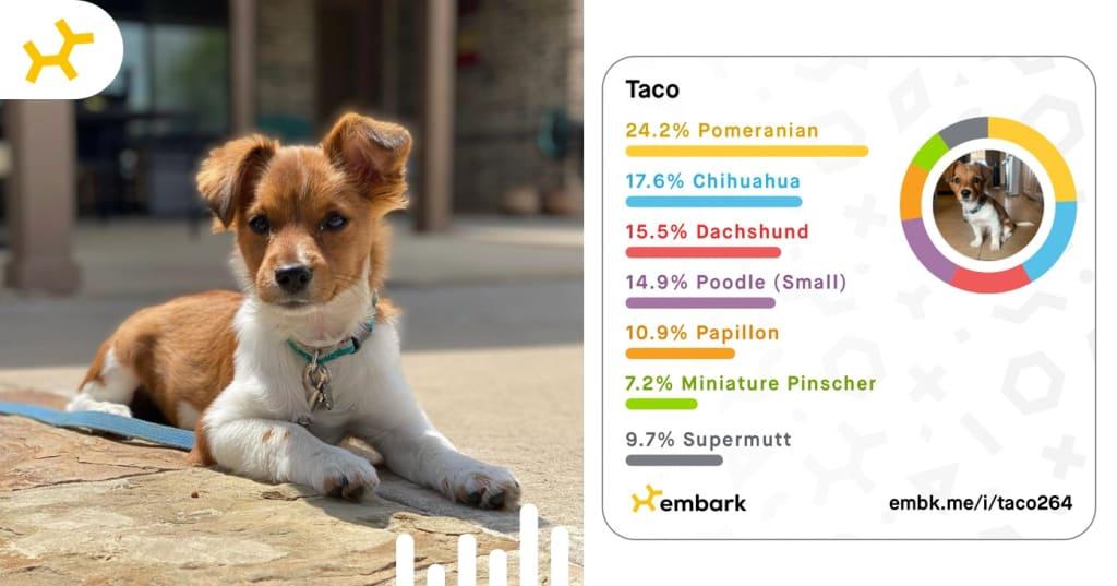 Taco Breed Reveal