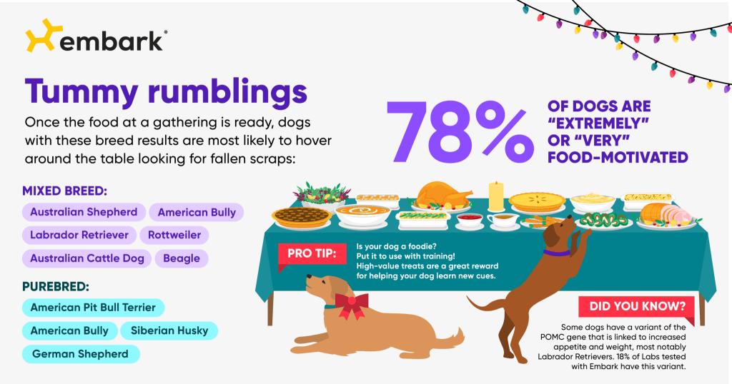 holiday routine dog food motivation