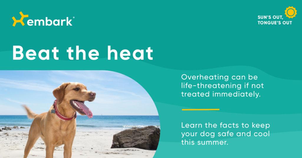Beat The Heat dog on peace