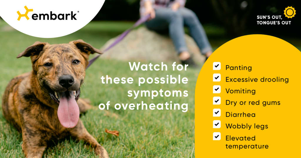 Dog on grass with list of symptoms of overheating