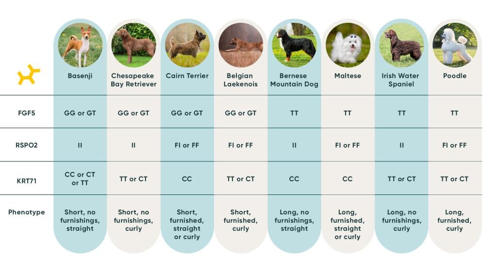 Dog Coat Type and Length