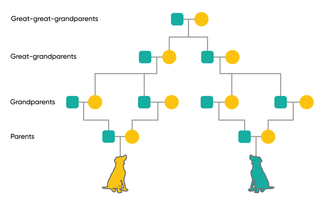 Pedigree chart with green squares and yellow circles